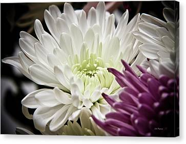 Two Flowers Canvas Print by John Pagliuca