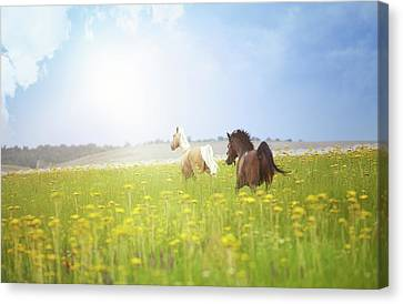 Two Horses Canvas Print by Arman Zhenikeyev - professional photographer from Kazakhstan