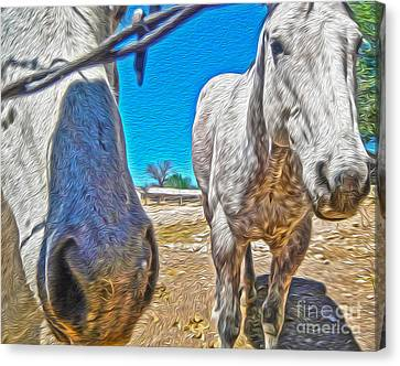 Two Horses Canvas Print by Gregory Dyer