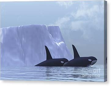 Two Killer Whales Swim Near An Iceberg Canvas Print by Corey Ford