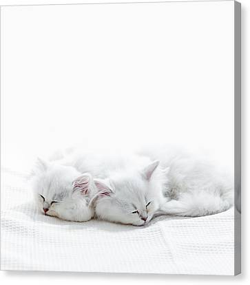 Two Kittens Sleep. Canvas Print by Ultra.f