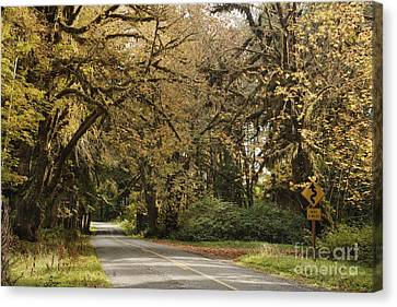 Two Lane Road Passing Under Trees Canvas Print by Ned Frisk