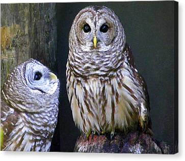 Two Little Owls Canvas Print