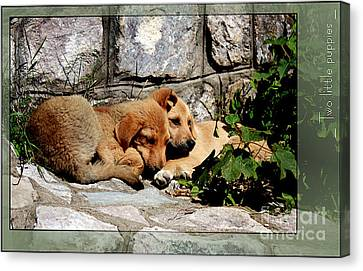 Two Little Puppies Canvas Print by Melania Sherdenkovska
