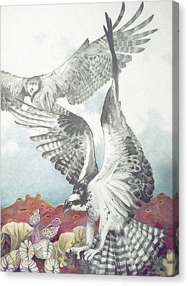 Two Ospreys Canvas Print by Kyra Belan