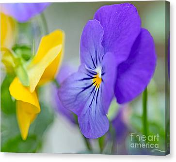 Canvas Print featuring the photograph Two Pansies Ln Love by Luana K Perez