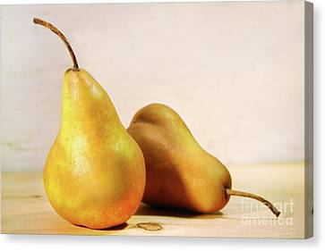 Two Pears Canvas Print by Sandra Cunningham