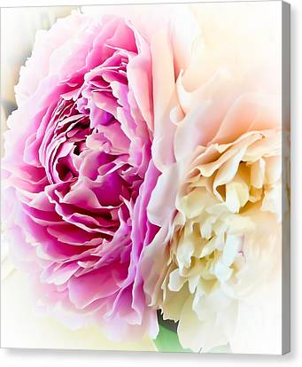 Canvas Print featuring the photograph Two Peonies by Ronda Broatch