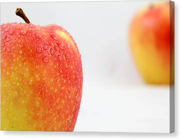 Two Red Gala Apples Canvas Print by Paul Ge