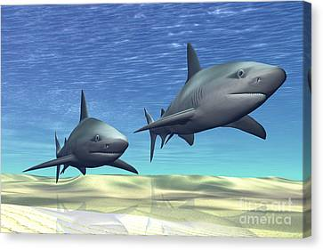 Two Sharks On Patrol Over A Sandy Reef Canvas Print by Corey Ford