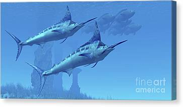 Two Sleek Blue Marlins Swim Close Canvas Print by Corey Ford