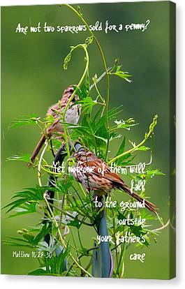 Two Sparrows For A Penny Canvas Print