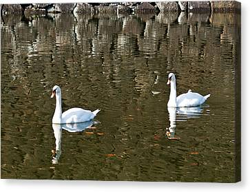 Two Swan Floating On A Pond  Canvas Print by U Schade