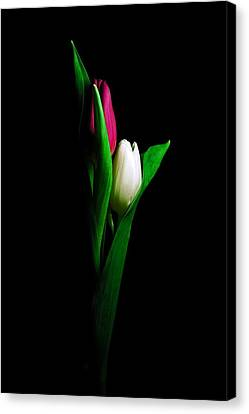 Two Tulips  Canvas Print by Elsa Marie Santoro