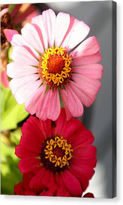 Canvas Print featuring the photograph Two Zinnias In The Shade by Paula Tohline Calhoun