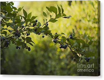 Produce Canvas Print - U Pickers Delight by Kim Henderson