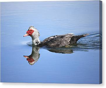 Canvas Print featuring the photograph Ugly Duckling by Penny Meyers