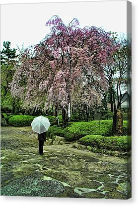 Umbrella With Cherry Blossoms Canvas Print