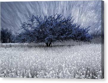 Canvas Print featuring the photograph Unbelievable by Yvonne Emerson AKA RavenSoul