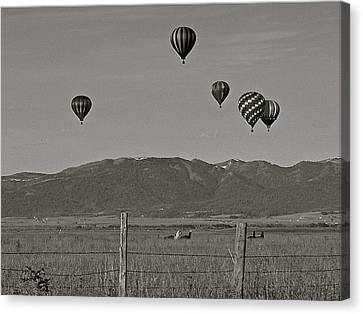Canvas Print featuring the photograph Unconcerned Lamas by Eric Tressler