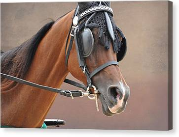 Under Harness Canvas Print by Jan Amiss Photography
