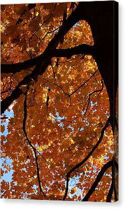 Under The Canopy Canvas Print by Lyle Hatch