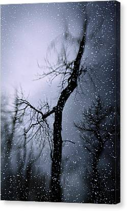 Under The Snow Canvas Print