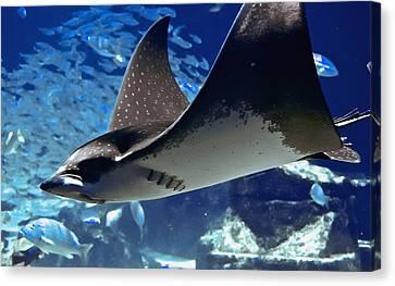 Underwater Flight Canvas Print
