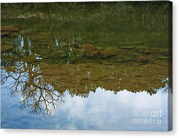 Underwater Landscape Canvas Print by Lisa Holmgreen