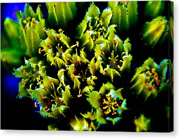 Underwater Out Of Water Canvas Print by Joshua Dwyer