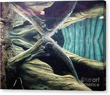 Canvas Print featuring the photograph Underwater Reflection Of An Alligator Surfacing by Jim Fitzpatrick