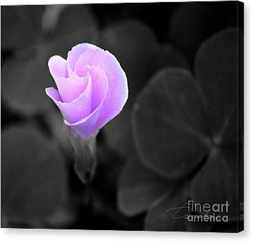 Unfolding Canvas Print