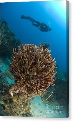 Unidentified Species Of Sponge Canvas Print by Steve Jones