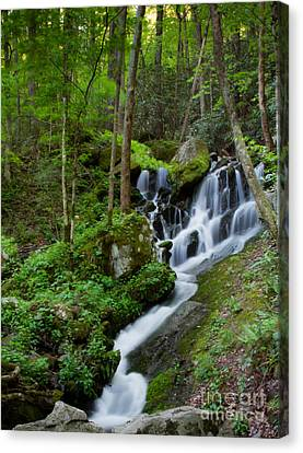 Unnamed Falls At Tremont Nc Canvas Print by E Mac MacKay