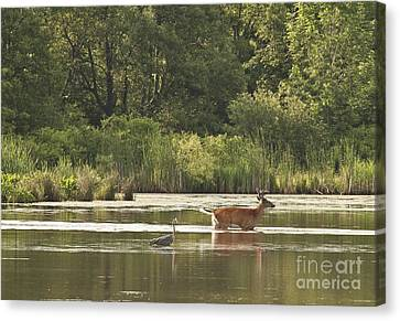 Canvas Print featuring the photograph Unusual Pair  by Jeannette Hunt