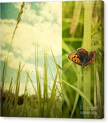 Fall Grass Canvas Print - Unveil by Violet Gray