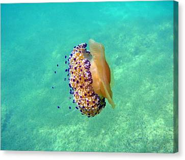 Unwelcome Jellyfish Canvas Print by Rod Johnson