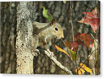 Up A Tree Canvas Print by Debbie Sikes