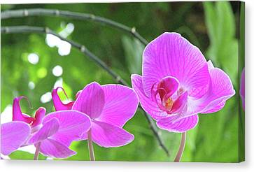 Up Front Canvas Print by Becky Lodes