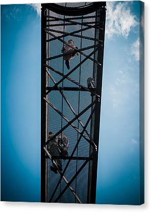 Canvas Print featuring the photograph Up In The Skies by Lenny Carter