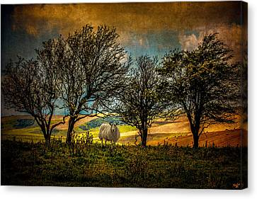 Canvas Print featuring the photograph Up On The Sussex Downs In Autumn by Chris Lord