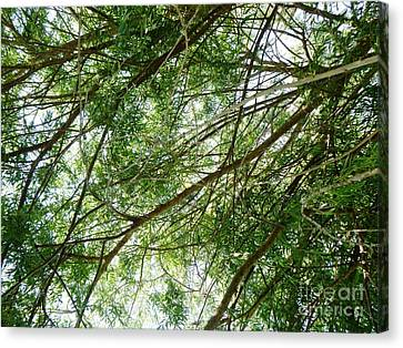 Up Through The Willow Tree Canvas Print by Alys Caviness-Gober