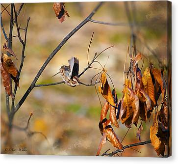 Up Up And Away - Sparrow Canvas Print by J Larry Walker