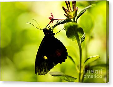 Canvas Print featuring the photograph Upside Down by Leslie Leda