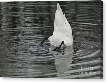 Canvas Print featuring the photograph Upside Down by Charles Lupica