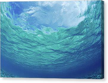 Upward To Surface Canvas Print by Don King - Printscapes