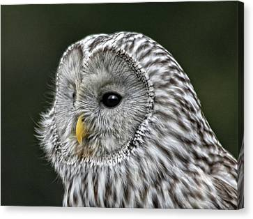 Ural Owl Canvas Print by Sandra Anderson