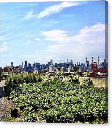 Urban Nature - New York City Canvas Print by Vivienne Gucwa