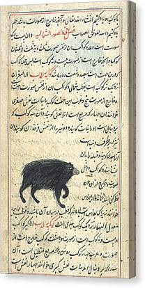 Ursa Minor, 17th Century Canvas Print by Science Source