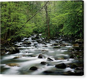 Usa, Tennesse, Great Smoky Mountains Np, Little Pigeon River Canvas Print by Robert Cable